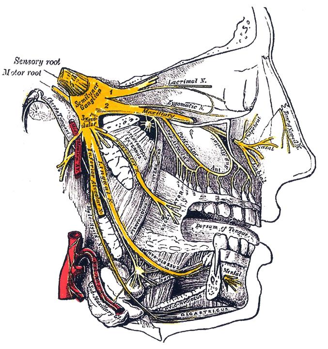 Cold-stimulus headache