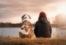Facts About Dog Behavior